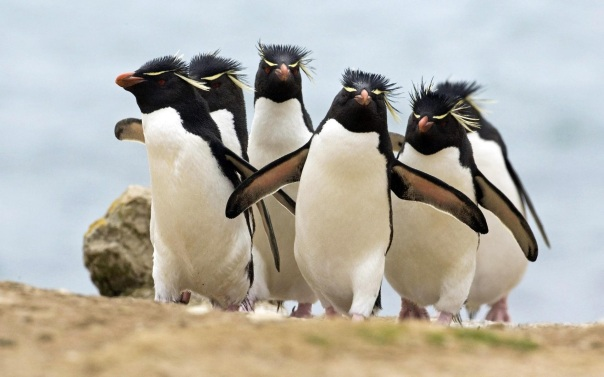 http://animalsadda.com/adelie-penguin/